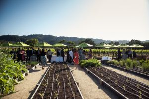 Indian_Brix_Sonoma_Napa_winery_wedding_0068.JPG